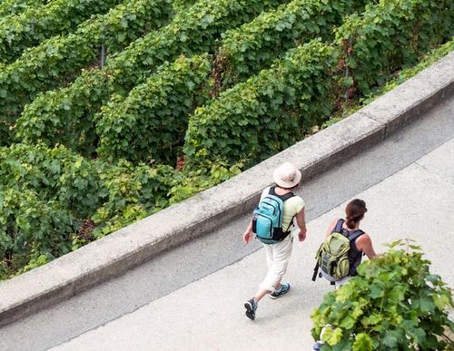 Weinbauexkursion